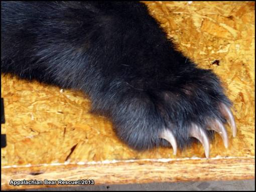 Paw with claws