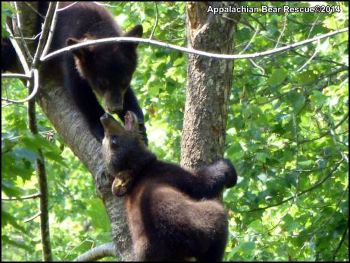 Bucky and Sweet Pea in tree.