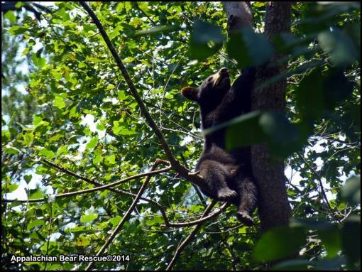 cub on branch of tree