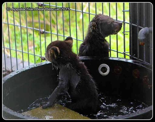 Two wet cubs