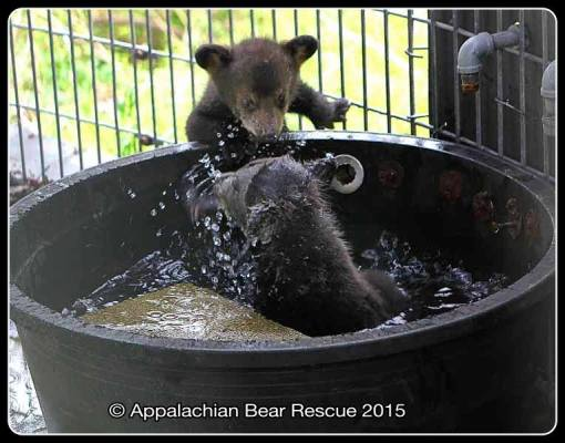 Cubs in tub