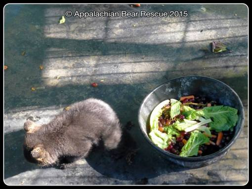 Cub with bowl of food