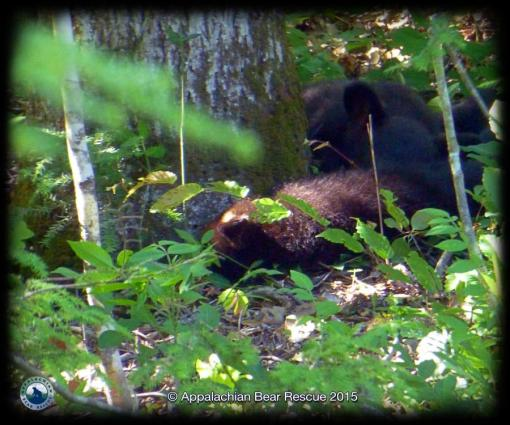 3 cubs napping