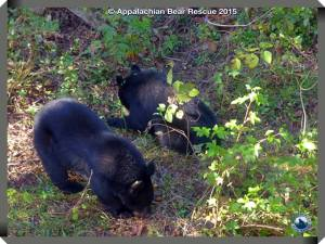 cubs eating