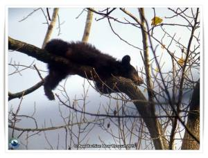 Tedford on a branch