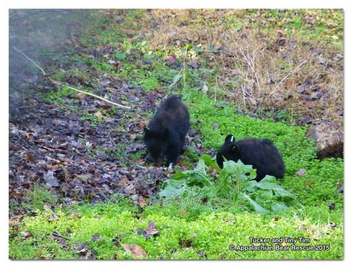Cubs forage