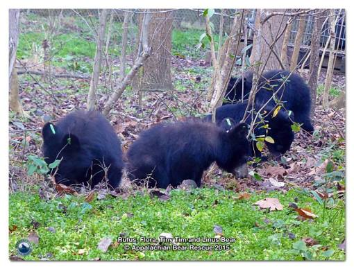 cubs in Wild Enclosure 1