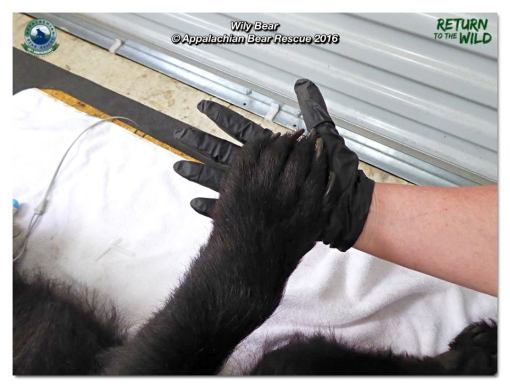 Wily's paw - Janet's hand