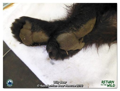 Wily's back feet