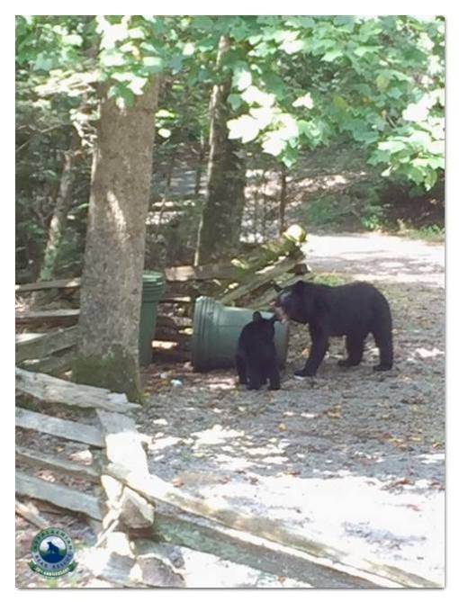 Bears with garbage can