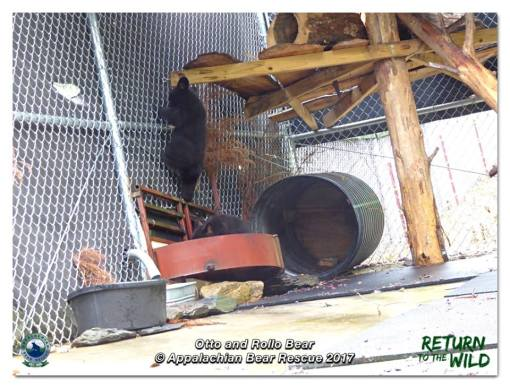 New digs for the cubs appalachian bear rescue for Rollos otto